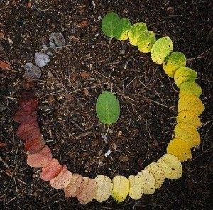 the-life-cycle-of-a-leaf